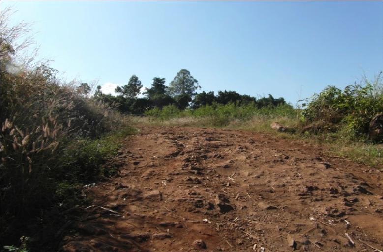 Road to Nessa
